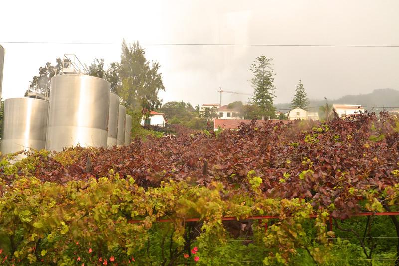 Vines… Winery.