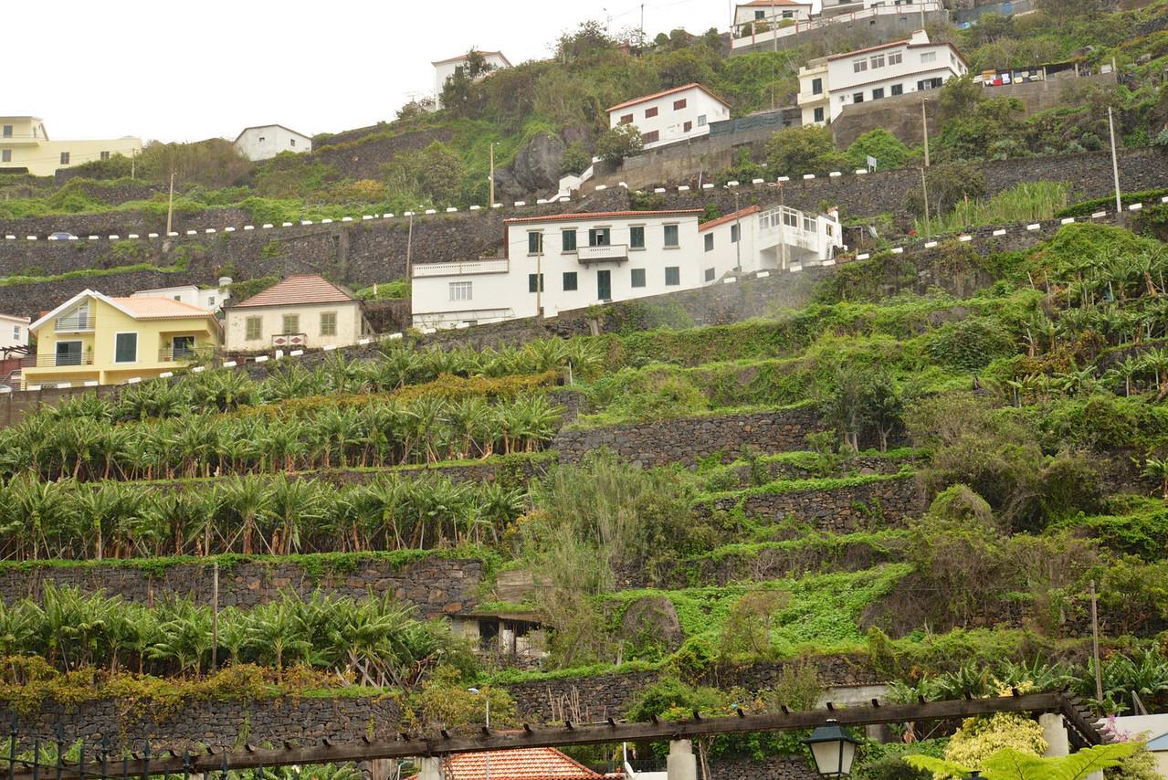 Terraced Farming… No Farm is Over 2 Arcres.