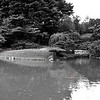 Study in black and white; with a touch of vermillion - panorama of the Japanese Hill-and-Pond Garden from the viewing pavilion.