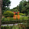 View of the torii at the Japanese Hill-and-Pond Garden from a path circling the pond.