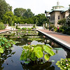 Lily Pool Terrace - there are nearly a 100 varieties of hardy and tropical water-lilies and sacred lotus planted in the two pools.