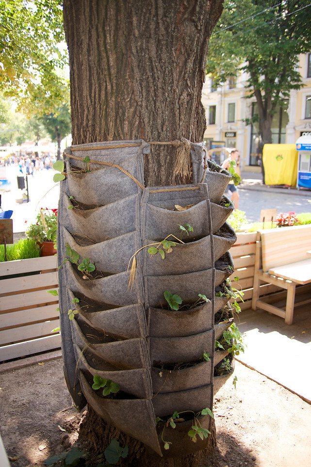 Interesting Tree Decor… Plants in The Linen Pockets