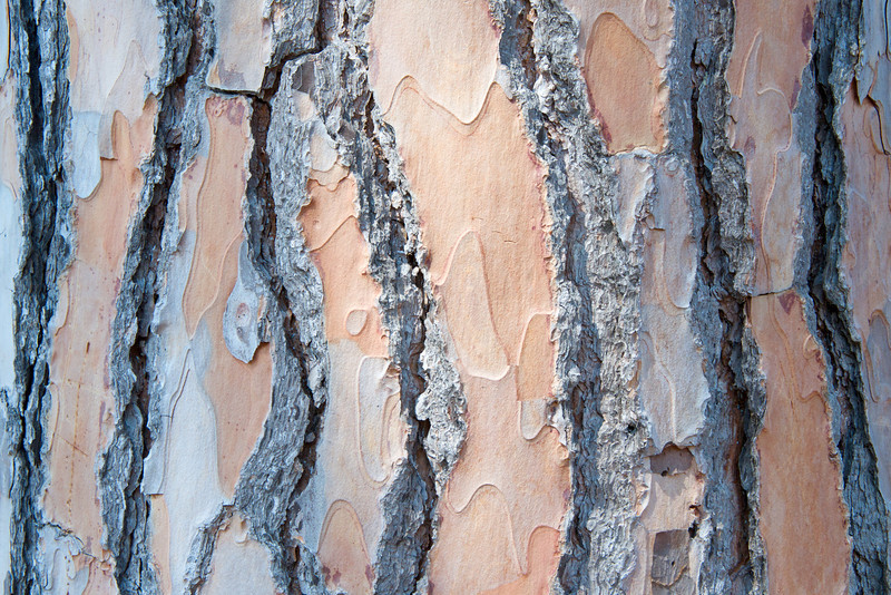 Texture… Bark of Umbrella Pine