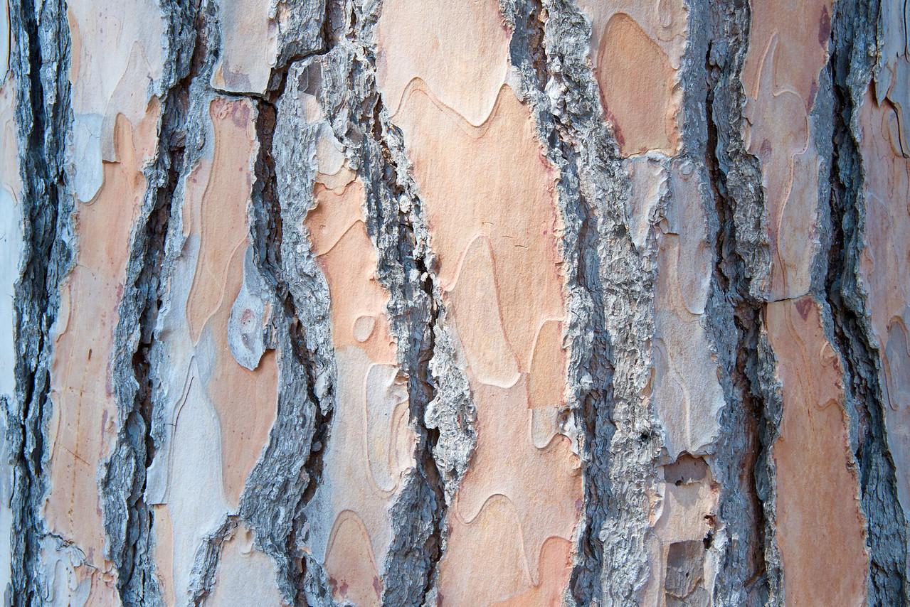 Texture… Bark of Umbrella Pine