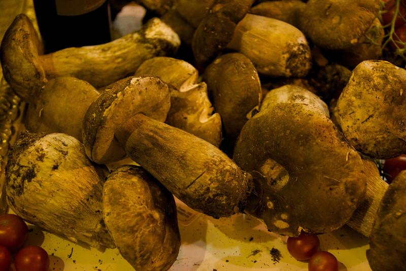 Incredible Size of Porchini Mushrooms