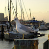 On the Norfolk boardwalk, the gulls watched the sunset with us.