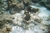 Underwater at Fins 'n' Flippers