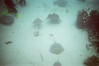 Snorkeling and scuba diving with stingrays in Grand Cayman