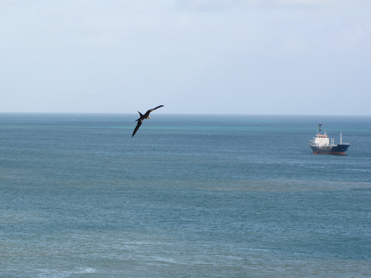 We're being followed by several Frigate Birds.