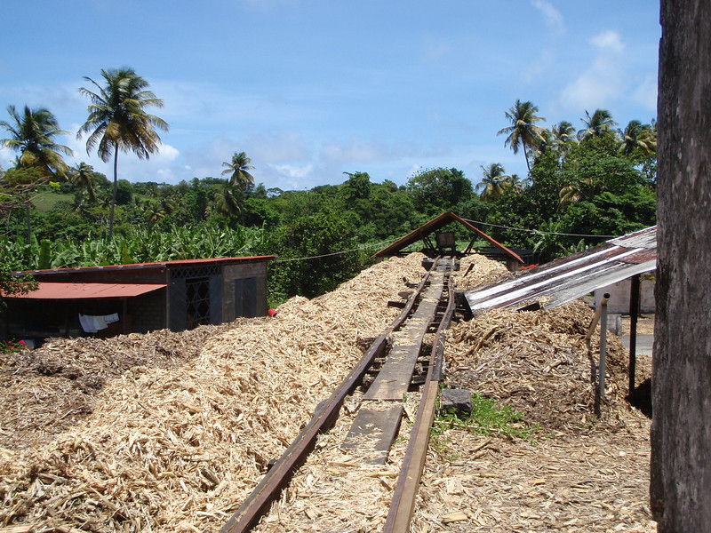 Piles of leavings from crushed sugarcane dry in the sun.