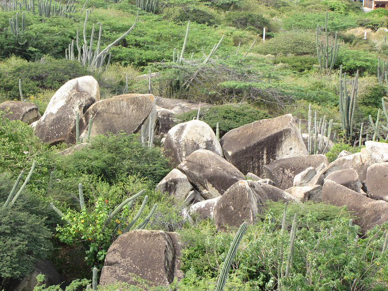 Boulders and cactus.
