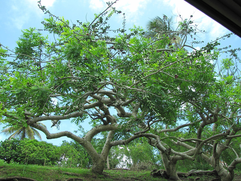 Interesting tree.