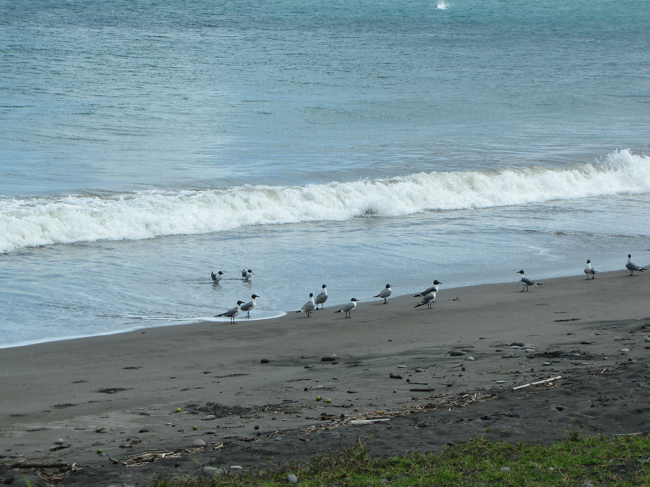 Gulls on the beach.