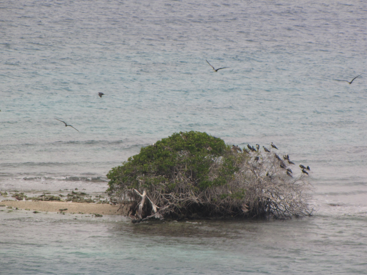 This lone tree on the island attracted lots of birds.
