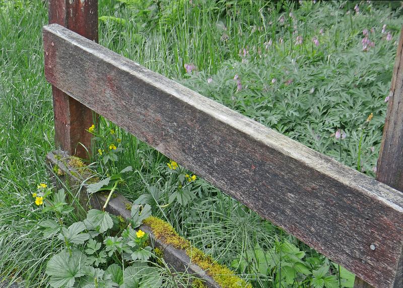 Fence along walk