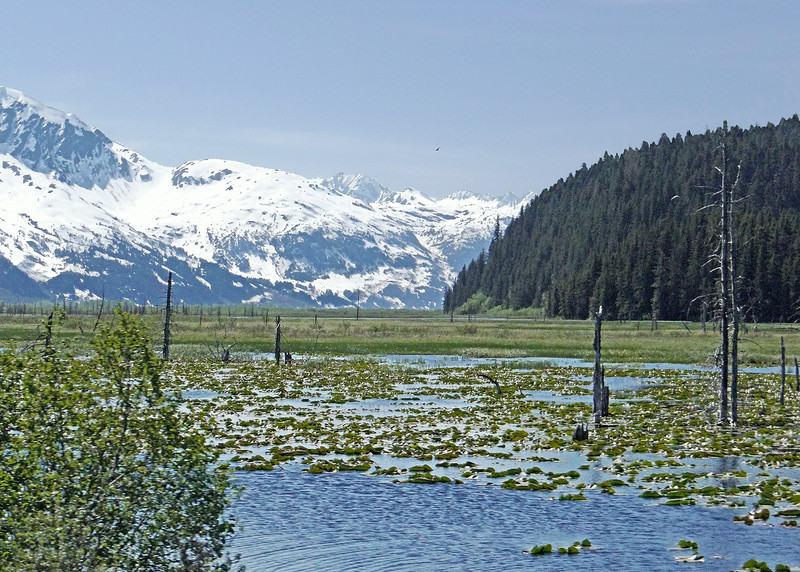 Between Seward Junction and Portage Glacier on our way back to Anchorage from Homer to catch our flight home