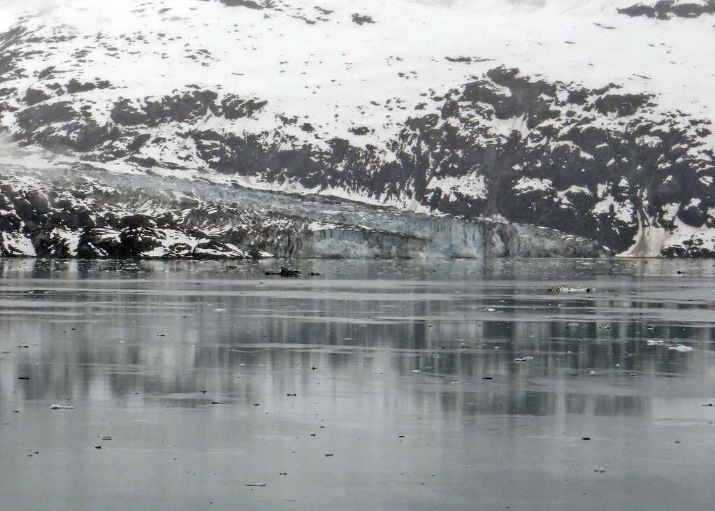 Lamplugh Glacier is a tidewater glacier in Glacier Bay measuring about 3/4 of a mile wide and about 150 fee high.