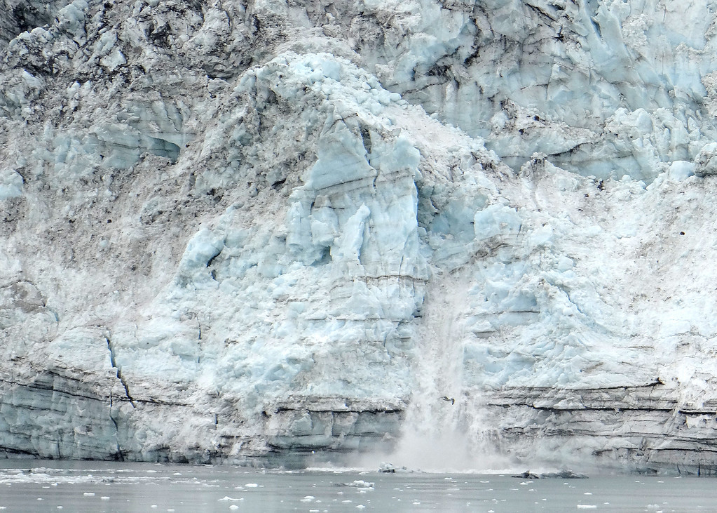 Glacier Bay - Margerie Glacier and another calving, almost in the middle of the picture.  Notcie the size in relationship to the bird flying.