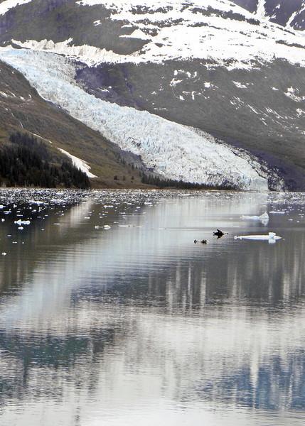5AK6-2-13CollegeFjordGlaciers