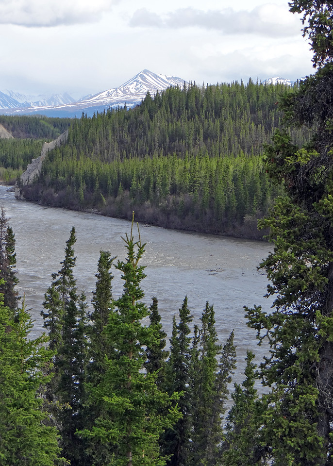 Nenana River from room
