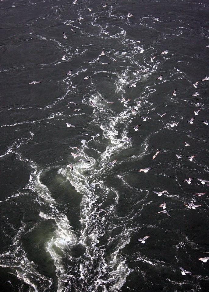 Sea gulls following ship