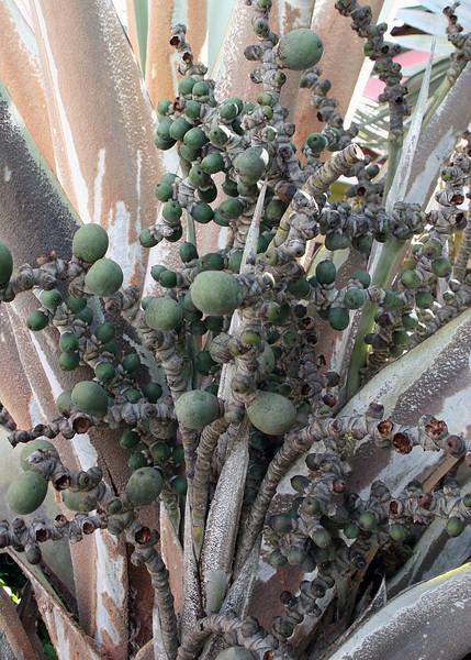 Interesting plant life