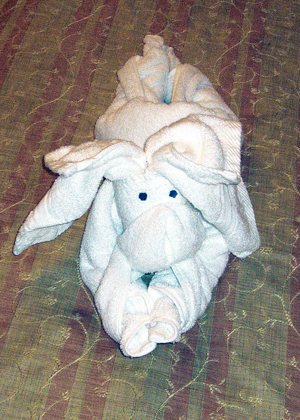 "We were presented each night with ""towel animals"".  Here is the bunny"