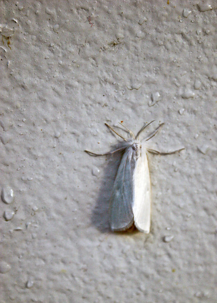 A white moth on the wall next to where Mike is sitting the the picture before.