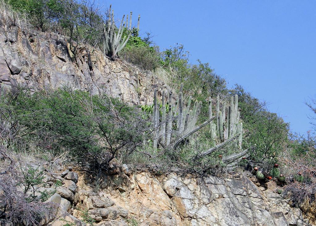Cactus in the tropics
