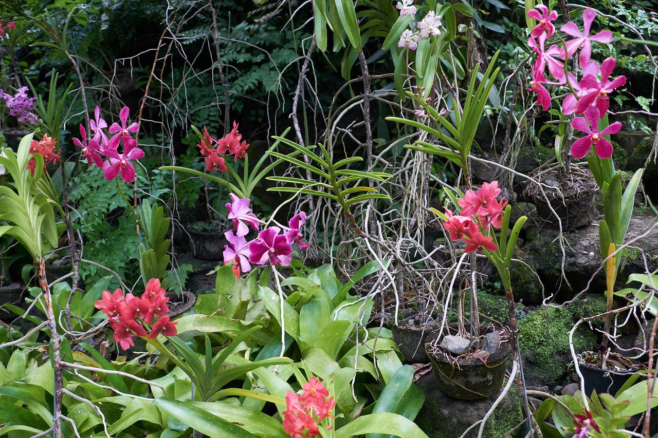 Over 2,000 varieties of orchids grow in The Garden of The Sleeping Giant.