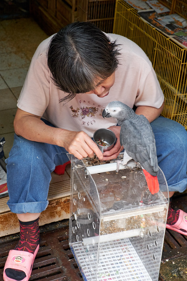 Owner feeding his bird.