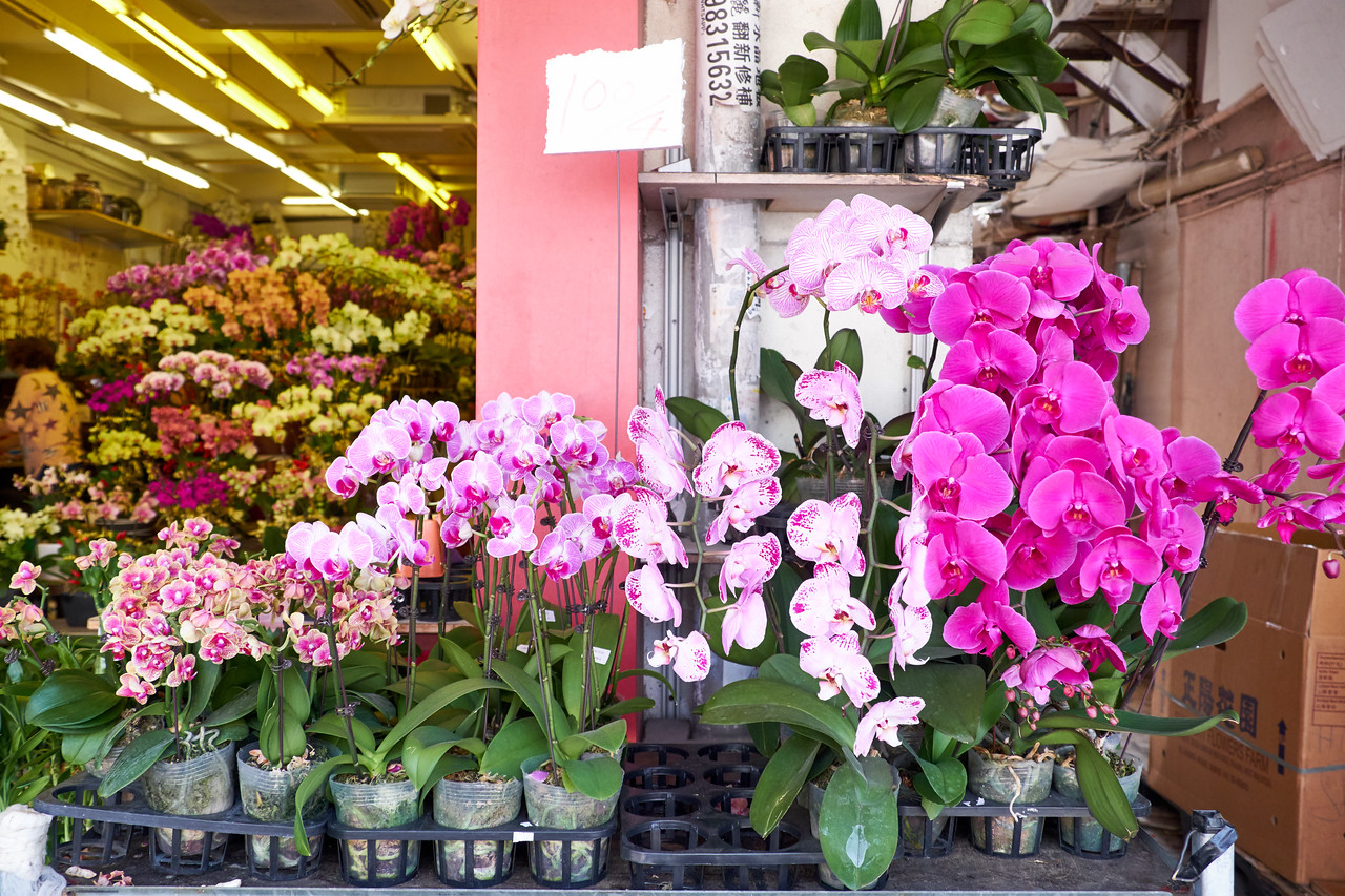An entire shop of nothing but orchids.