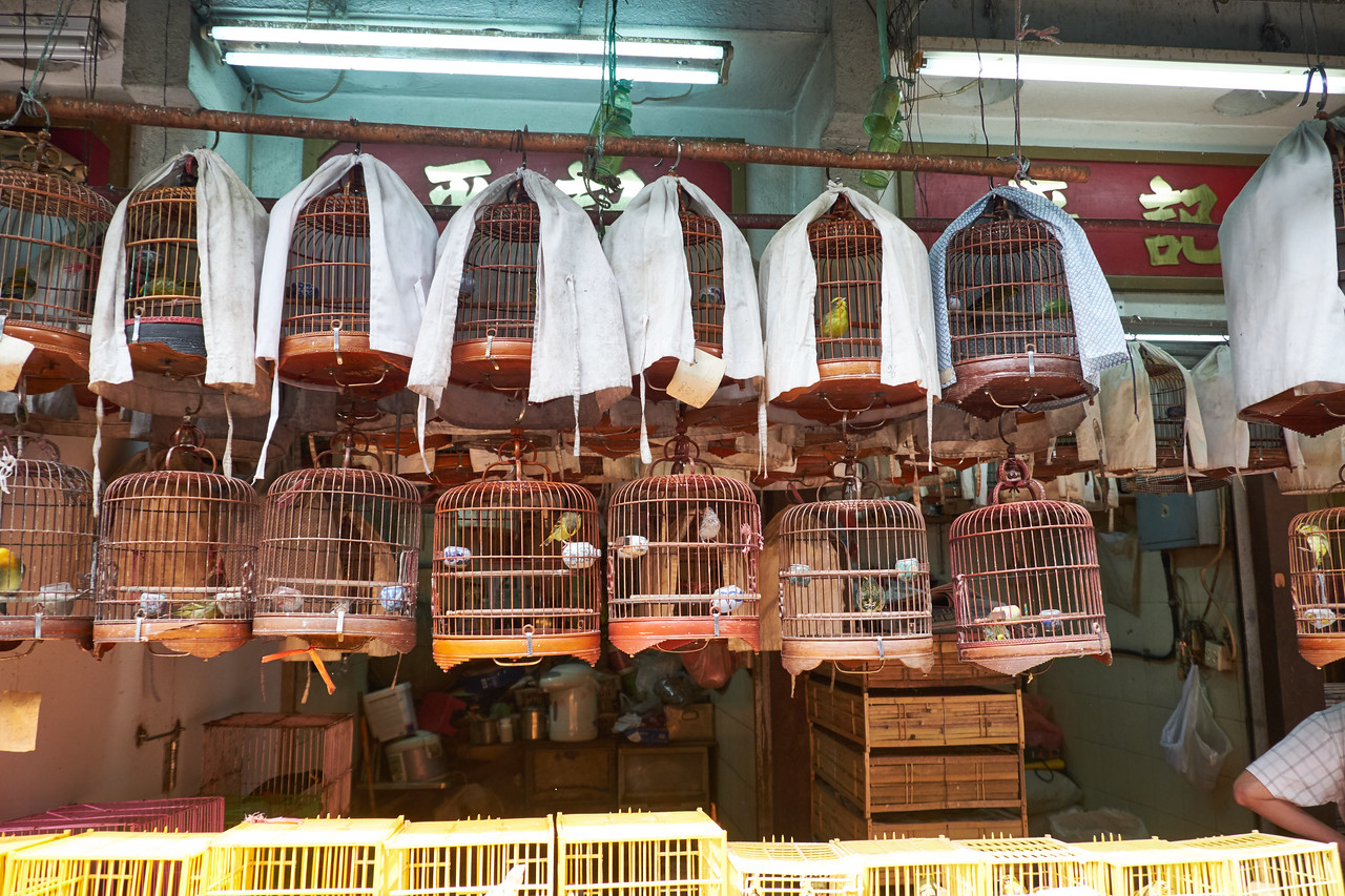 Birds in hanging cages above the stacked cages.