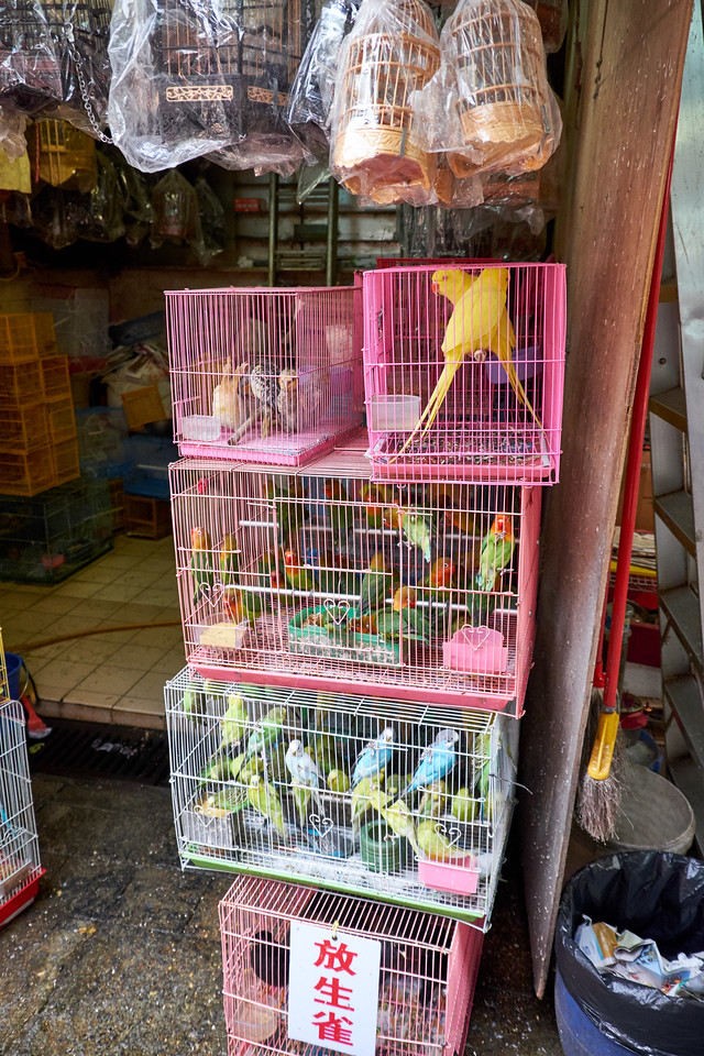 Birds of all types stacked in cage after cage.