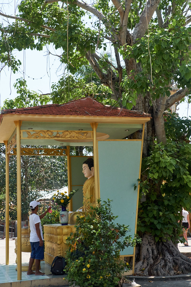 The Bronze Buddha is under the same kind of tree as the tree in India that the Buddha prays under.