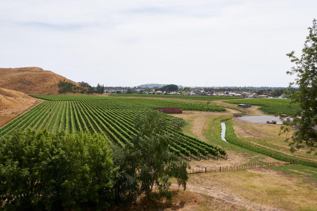 Vineyards of Mission Estate.