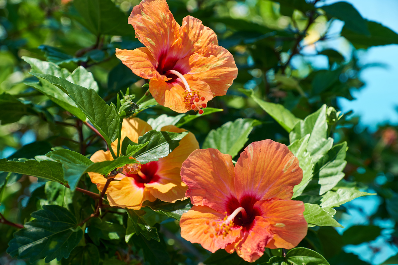 Loved the hibiscus on the island.