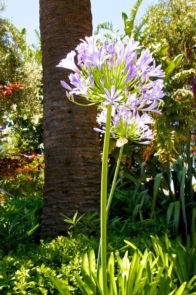 Unusual Single Purple Flowers
