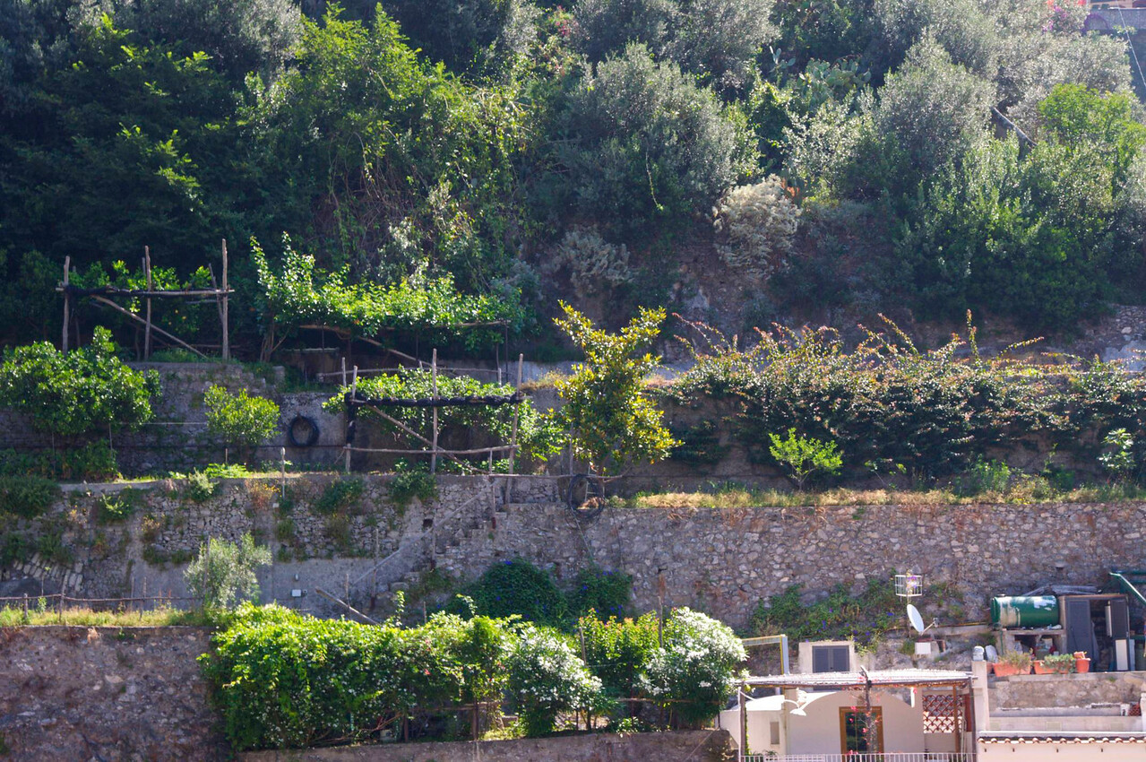 Terraced Vineyards just Above Positano Shops