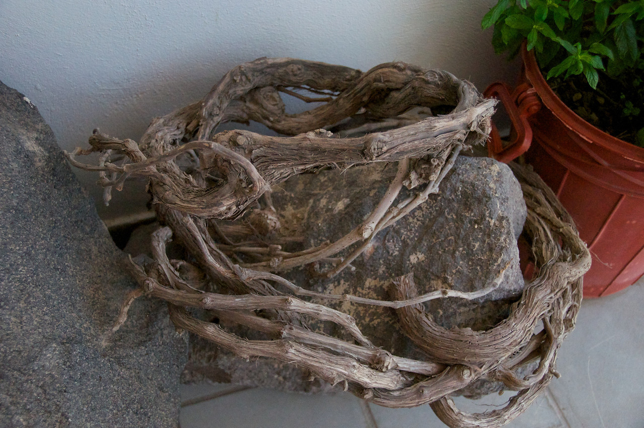 """Vines Are Woven Into """"Baskets"""" To Protect The Grapes and Capture The Dew from Himidity"""