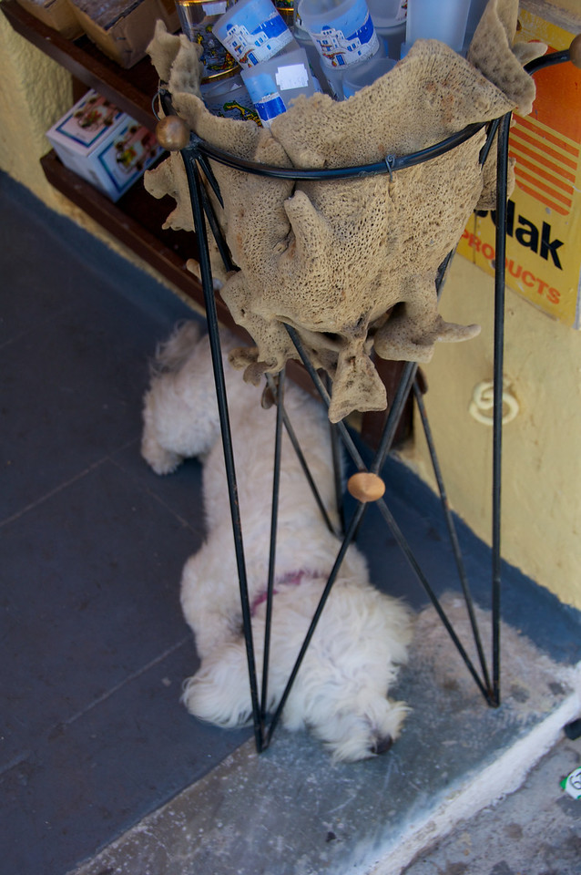 All The Dogs in Oia Were Non Plussed by The Tourist Traffic   This Dog is Sleeping by a Shop Door