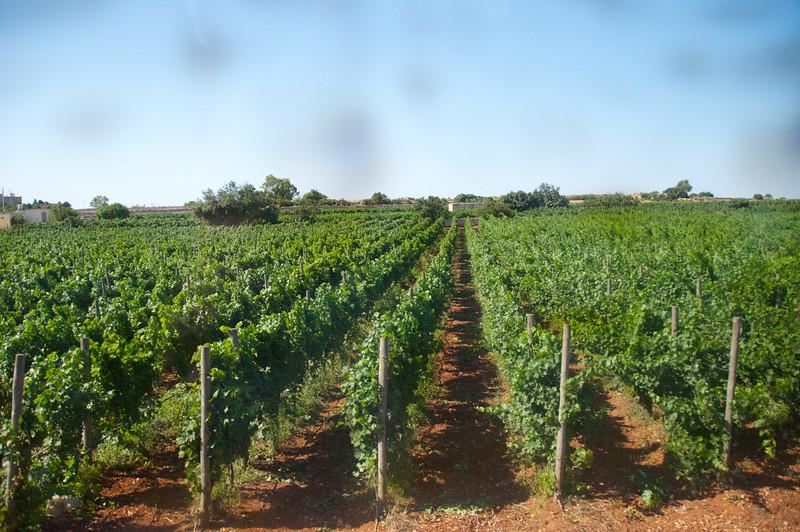 Vineyards (Taken from Bus)