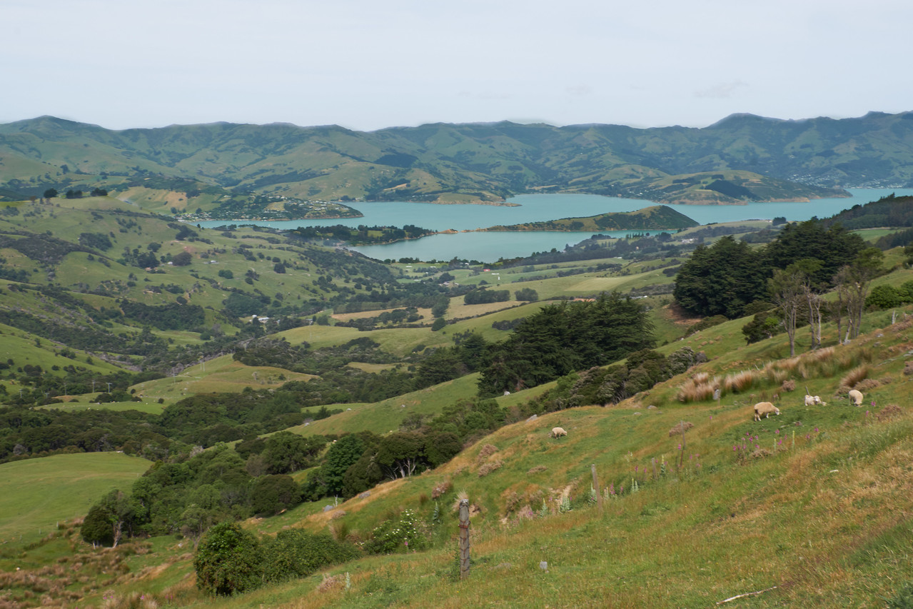 Typical New Zealand countryside (from bus).