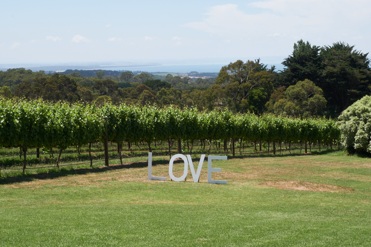 Vineyards at Max's Retreat. The LOVE sign was from a wedding they had over the weekend.