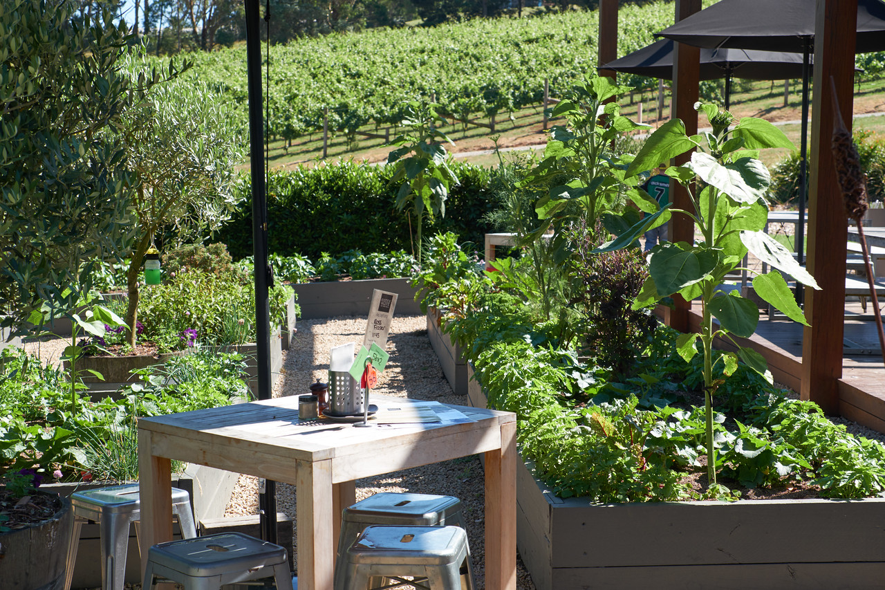 Decorative plant boxes on the seating patio with vineyards on the background. They also have other fields where they grow their vegetables in greater quanity.