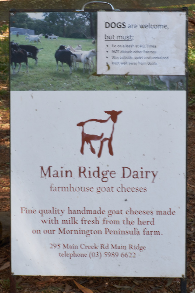 Cheese tasting at Main Ridge Dairy. Another local producer.