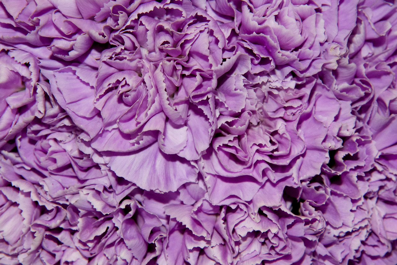 Lavender Flower Texture