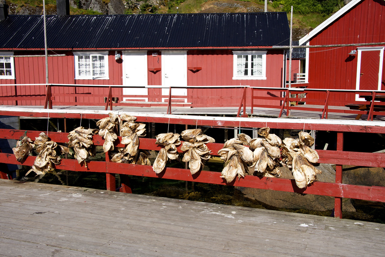 Cod heads left from drying