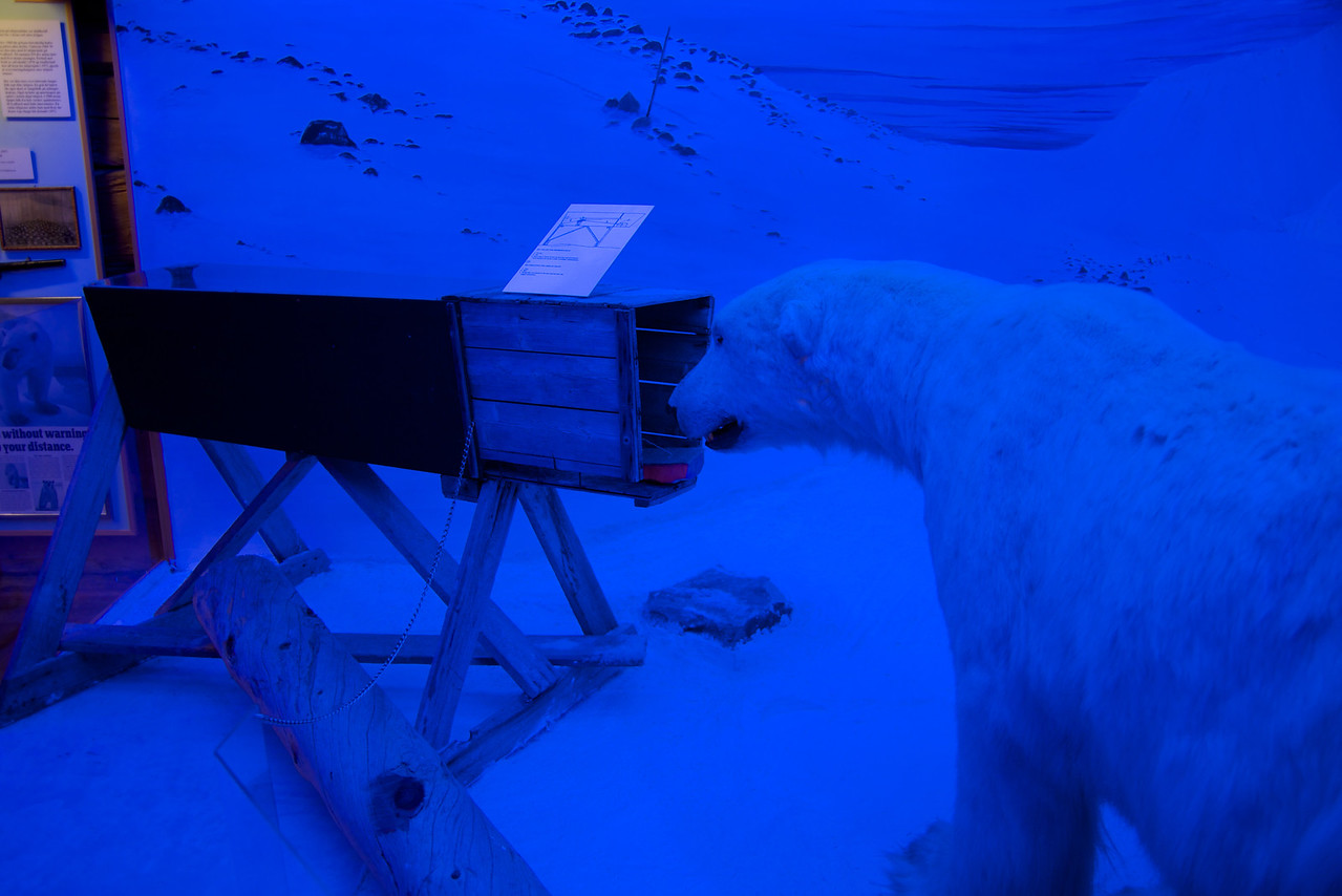 Bait in the box    polar bear comes to eat, trap door opened at other end and the bear is shot (rifle in the box)