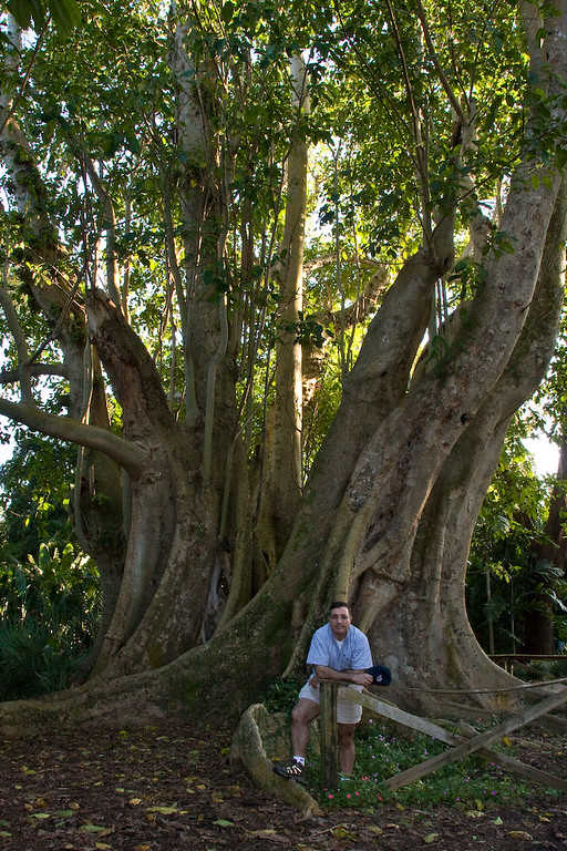 Mui provides perspective for size of the Banyan Tree.